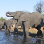 Elefanten am Wasserloch im Etoscha Nationalpark